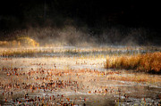 Darlene Terry Metal Prints - Autumn Mist Metal Print by Darlene Terry