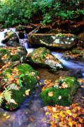 Mountain Stream Photo Posters - Autumn Monongahela National Forest Poster by Thomas R Fletcher