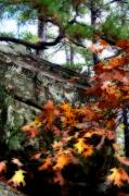 Robbers Metal Prints - Autumn Moss Metal Print by Lana Trussell