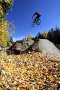 Yellow Bike Framed Prints - Autumn mountain bike in Whistler Framed Print by Pierre Leclerc