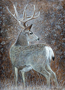 Game Painting Prints - Autumn Muley Print by Mike Stinnett