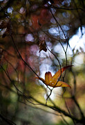 Fall Colors Photos - Autumn Mystere by Mike Reid