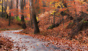 Harvest Time Posters - Autumn on a Quiet Country Lane Poster by Happy Walls