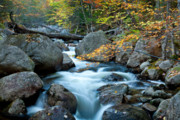 Mount Katahdin Posters - Autumn on Abol Stream Poster by Susan Cole Kelly
