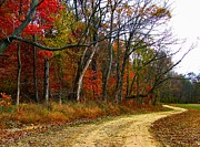 Fall Photos Posters - Autumn on Bottomland Road Poster by Julie Dant