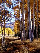Orange Trees Prints - Autumn Paint Chama New Mexico Print by Kurt Van Wagner