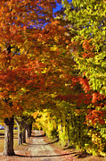 Autumn In New England Posters - Autumn Palette Poster by Joann Vitali