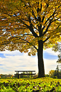 Picnic Table Framed Prints - Autumn park Framed Print by Elena Elisseeva