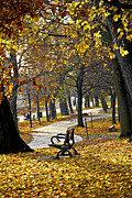 Empty Bench Prints - Autumn park in Toronto Print by Elena Elisseeva
