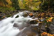 Stream Prints - Autumn Passages Print by Mike  Dawson