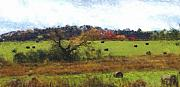 Digital Photograph Framed Prints - Autumn Pasture Framed Print by David Lane