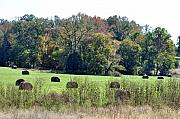 Hay Bales Photos - Autumn Pastures by Jan Amiss Photography