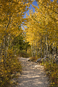Autumn Woods Metal Prints - Autumn Path Metal Print by Andrew Soundarajan