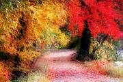 Fall Road Photos - Autumn Path II by William Carroll