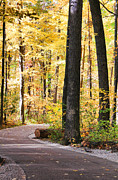 Wildwood Photos - Autumn Path by Jack Schultz