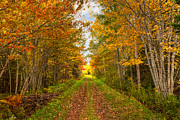 Red Dirt Posters - Autumn Path Poster by Matt Dobson