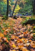 Autumn Leaves Metal Prints - Autumn Path Metal Print by Mike  Dawson