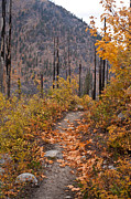 Leavenworth Photos - Autumn Path by Mike Reid