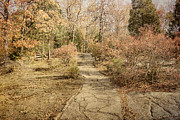 Fall Scenery Prints - Autumn Path Print by Sandy Keeton