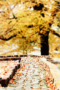 Cobble Stone Framed Prints - Autumn Pathway Framed Print by Stephanie Frey