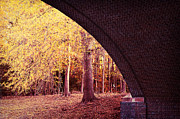 Lisa McStamp - Autumn Peek