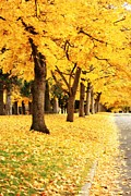 Yellow. Leaves Posters - Autumn Perspective Poster by Carol Groenen