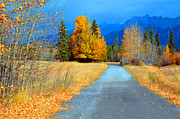 Fall Road Posters - Autumn Perspective Poster by Tara Turner
