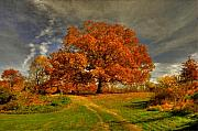 Fall Landscape Digital Art - Autumn Picnic on the Hill by Lois Bryan