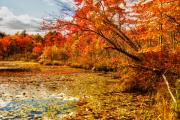 Photos Of Autumn Digital Art - Autumn Pond 2 by William Carroll