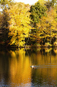 Leslie Leda Prints - Autumn Pond Print by Leslie Leda