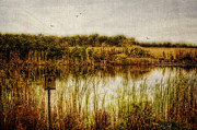 House Digital Art Originals - Autumn Pond by Mary Timman
