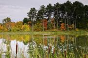 Canada Prints - Autumn Pond Print by Phill  Doherty