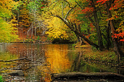 Fall Road Photos - Autumn Pond by William Carroll
