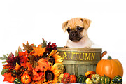 Puppy Art Prints - Autumn Puppy - Shelter Art Print by Renee Dawson