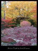 Manito Park Framed Prints - Autumn Purple Framed Print by Carol Groenen
