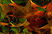 Wet Leaves Framed Prints - Autumn Rain Framed Print by Bonnie Bruno
