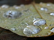 Abstract Leaf Prints - Autumn Rain Print by Juergen Roth