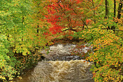 Franklin Art - Autumn Red By The Brook by Deborah Benoit