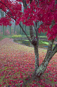 Red Photographs Metal Prints - Autumn Red Metal Print by Rob Travis