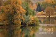 Autumn Scene Framed Prints - Autumn Reflection 41 Framed Print by Carol Groenen