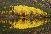 Yellow Leaves Framed Prints - Autumn reflections 1 Framed Print by Heiko Koehrer-Wagner