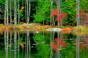 Pond Greeting Cards Digital Art - Autumn Reflections by Adam Shevron