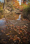 Autumn Reflections Print by Iris Greenwell