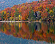 Lake Bohinj Framed Prints - Autumn Reflections on Lake Bohinj in Slovenia Framed Print by Greg Matchick