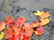 Red Leaves Photos - Autumn River Landscape Red Fall Leaves by Baslee Troutman Fine Art Photography