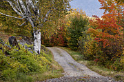 Gravel Road Photo Metal Prints - Autumn Road - D005840 Metal Print by Daniel Dempster