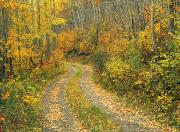 Country Dirt Roads Posters - Autumn Road Poster by Darwin Wiggett