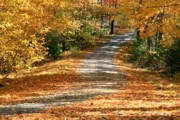 Country Roads Posters - Autumn Road Poster by Debra Straub