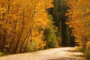 Foilage Posters - Autumn Road Poster by James Bo Insogna