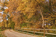 Fall Photographs Prints - Autumn  Road to the Ranch Print by James Bo Insogna